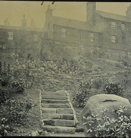 General view of a backcourt garden with houses in background